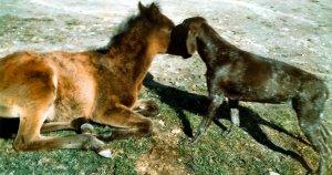 zobbi horse &dog