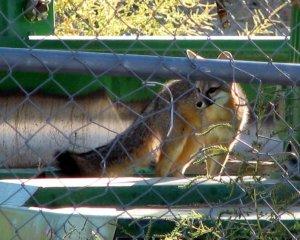 Oct 22 -Fox 008