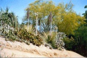 Succulent Garden RiversideBC