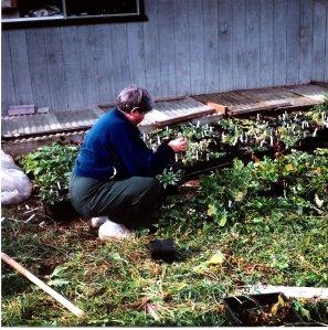 Betty with seedlings - Bonney Lake 10001