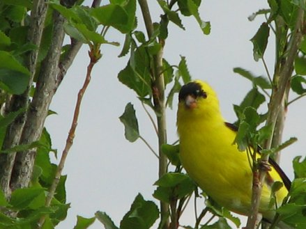 Birds & flowers 174